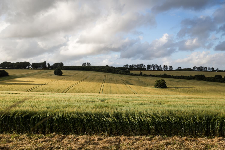 England Autumn Lean Timms (4 of 11).jpg