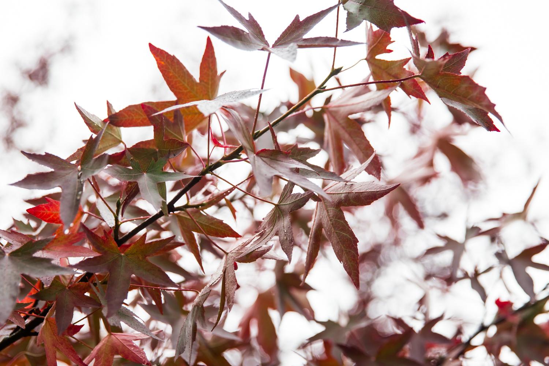 England Autumn Lean Timms (10 of 16).jpg