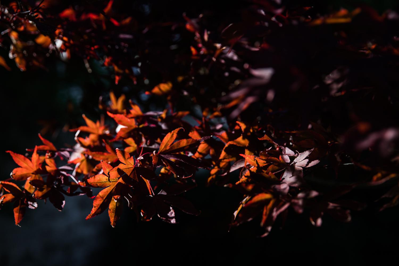 England Autumn Lean Timms (11 of 16).jpg