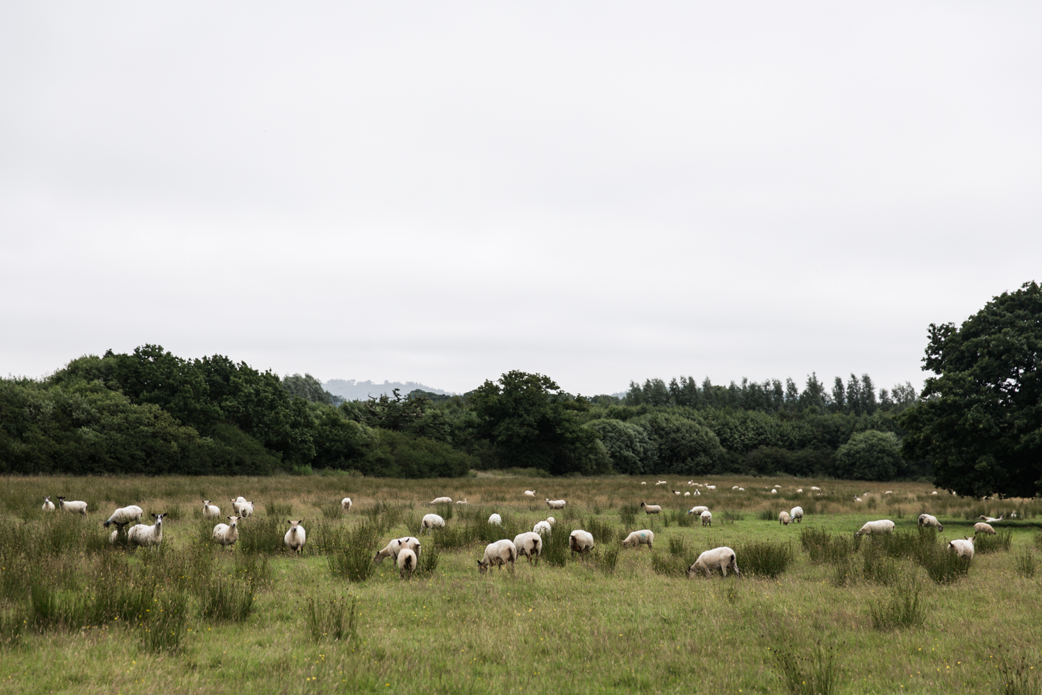 English Countryside Lean Timms  (3 of 18).jpg