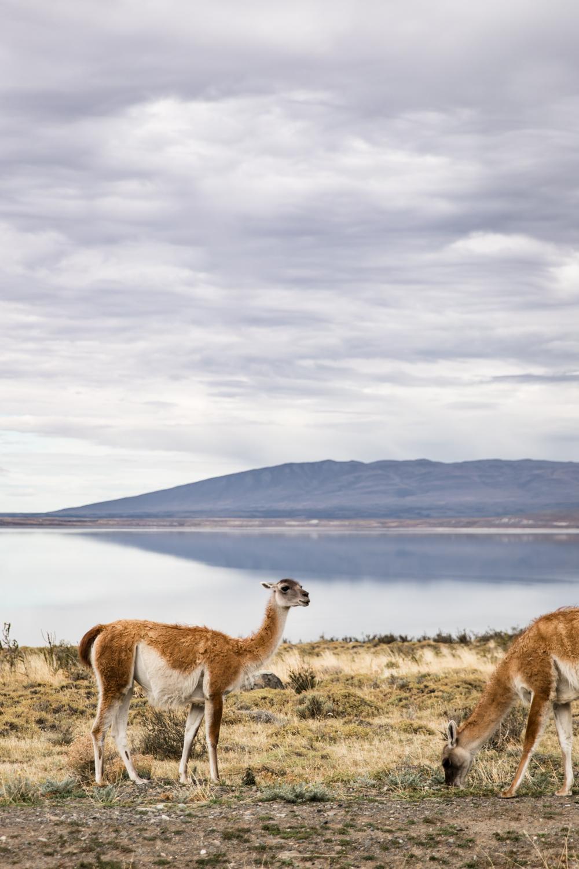 Lean Timms Patagonia Tierra  (9 of 40).jpg
