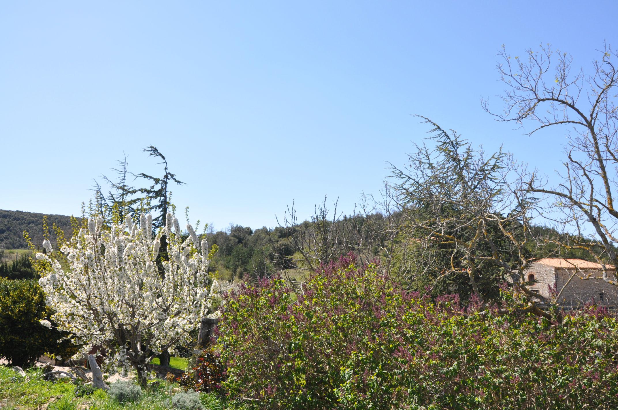 Garden in Spring.jpg
