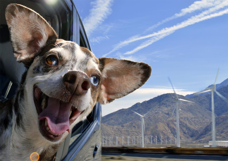 DogsinCars.1for website.jpg