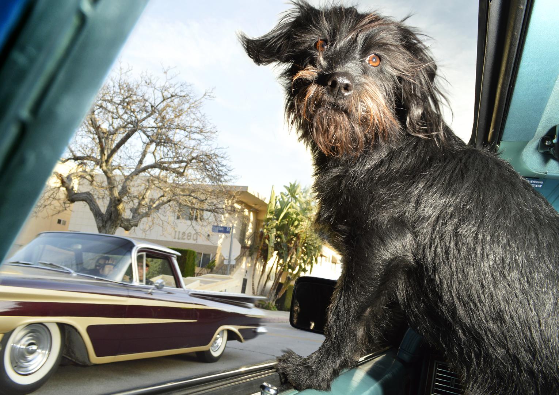 DogsinCars.4for website.jpg