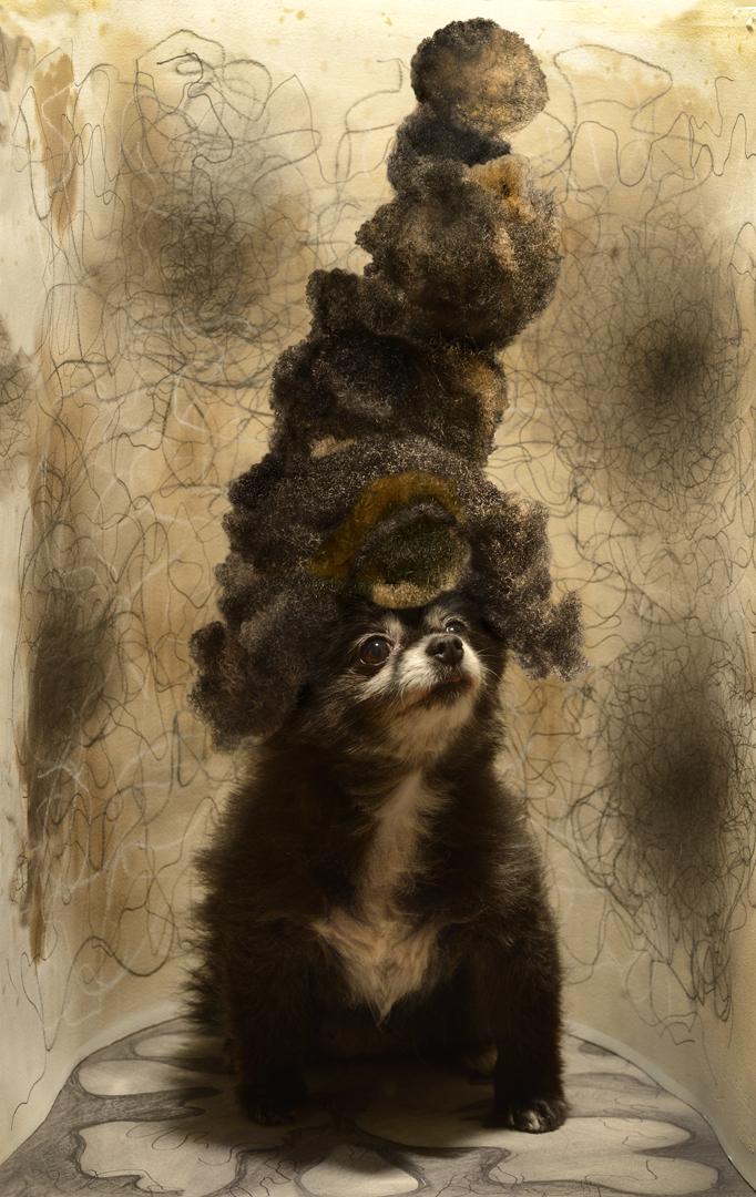 bearlie hair for website.jpg
