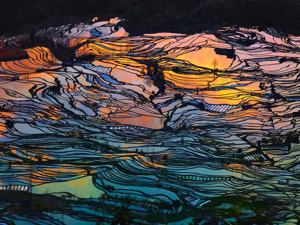 Aerial photo of paddy fields at sunset