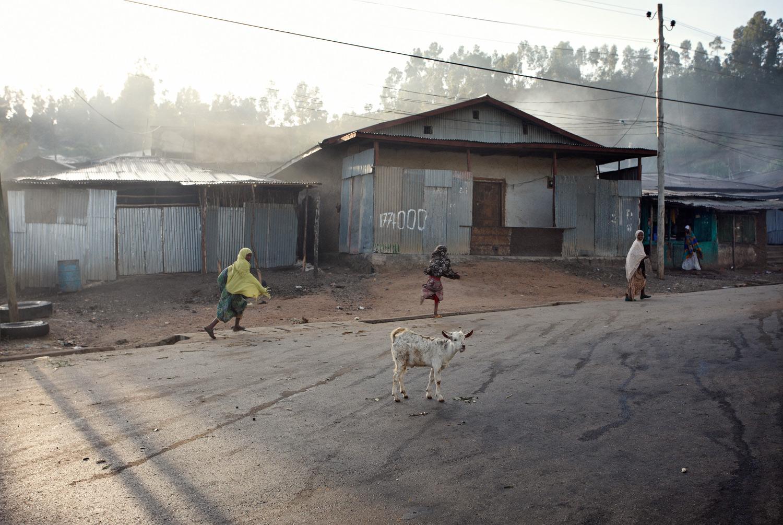 fc_ethiopia_goat_b.jpg