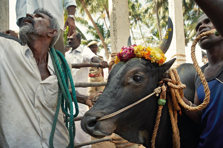 india_2023_1682_G2A2136-b.jpg