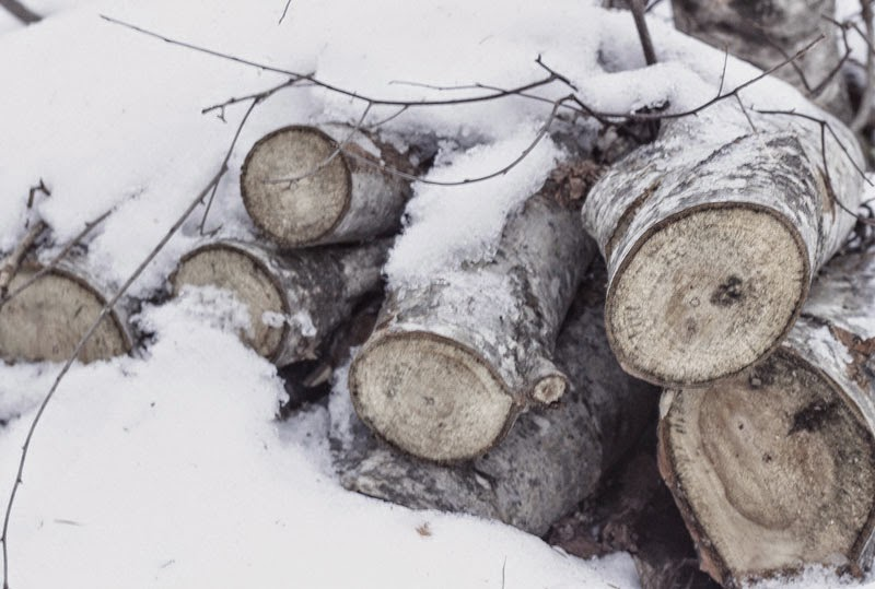 wood-in-snow.jpg
