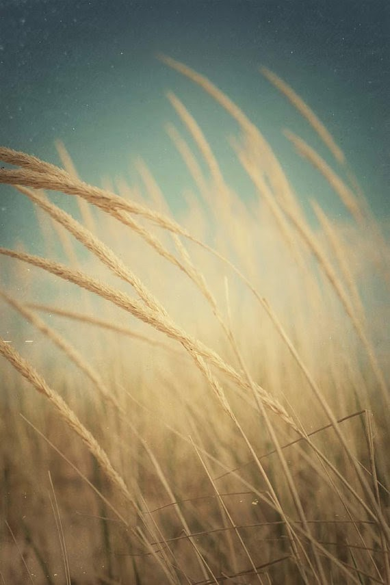 wheat-+summer+art.jpg