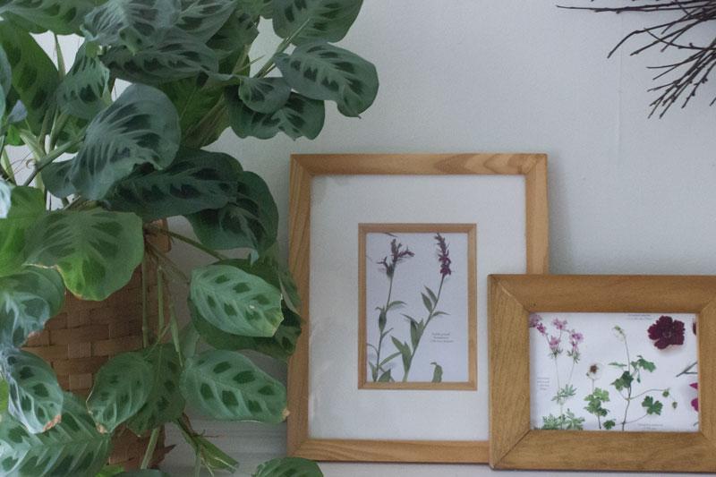 DIY framed botanical prints