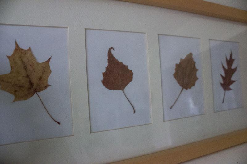 DIY framed leaves