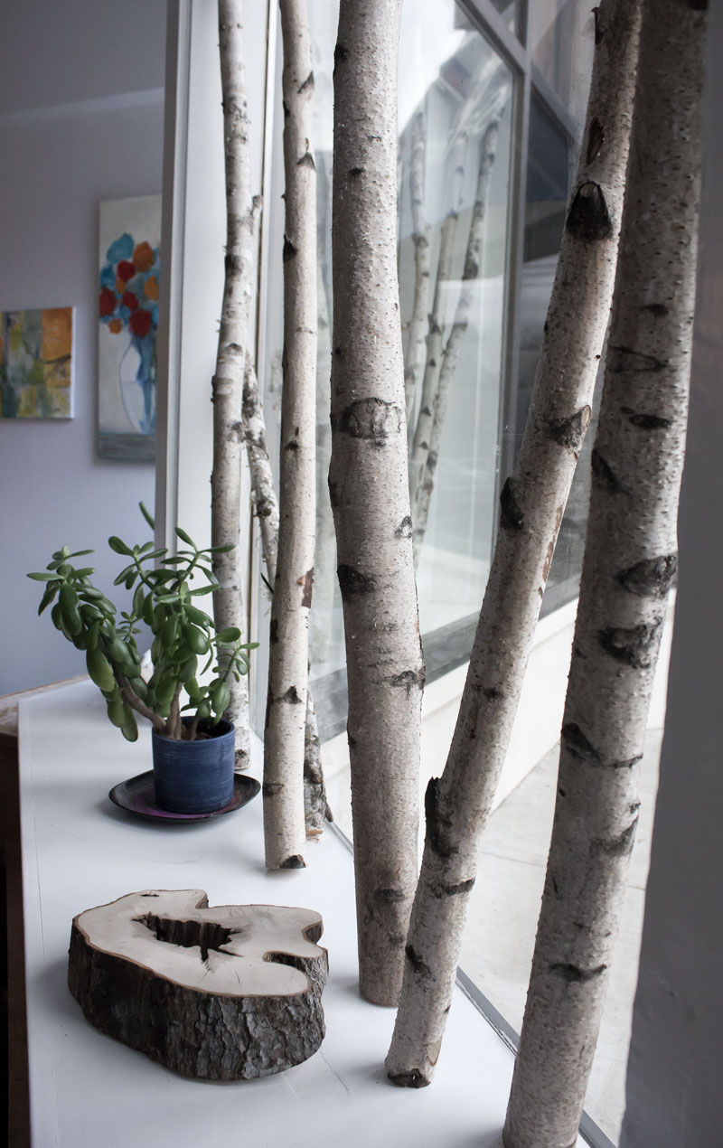 桦木树枝展示窗