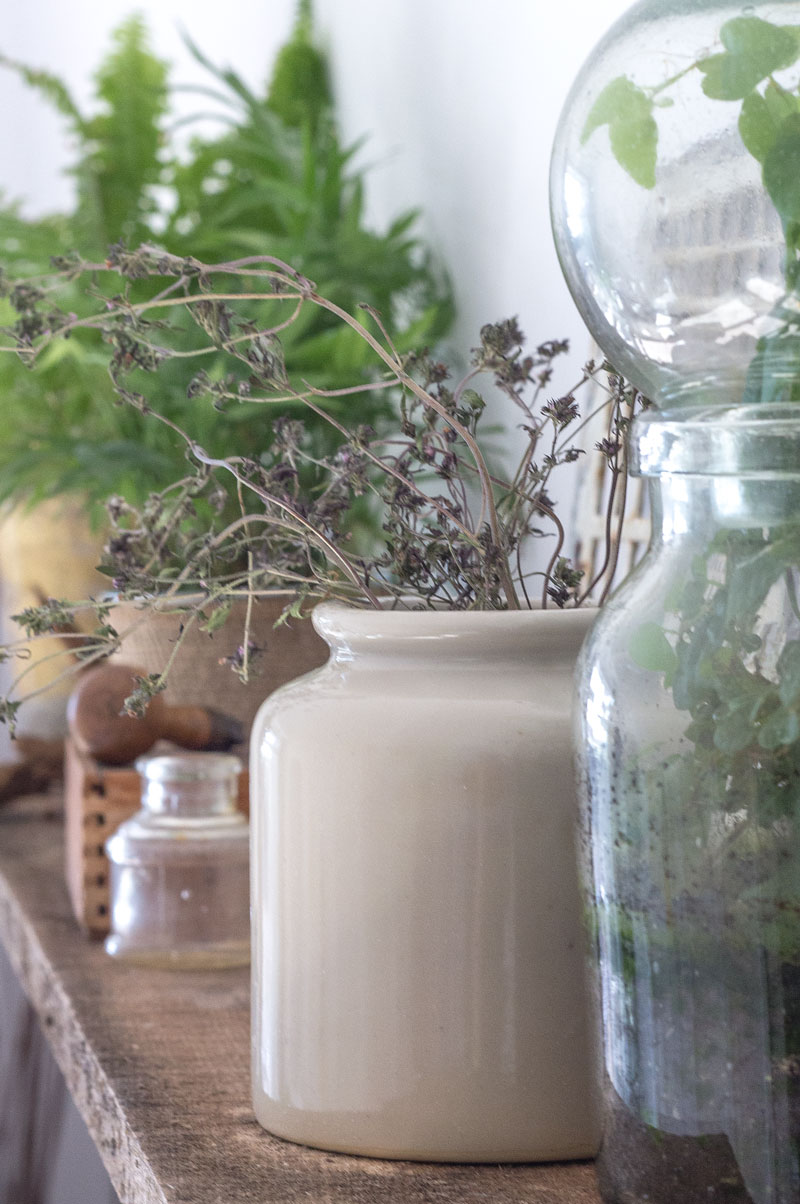 plant shelf with terrarium, wood boxes, vintage jars and dried herbs