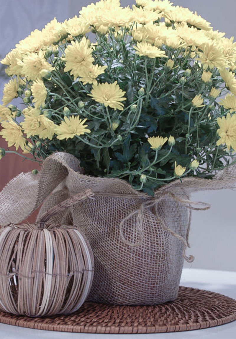 quick fix: how to make an ugly flower pot pretty