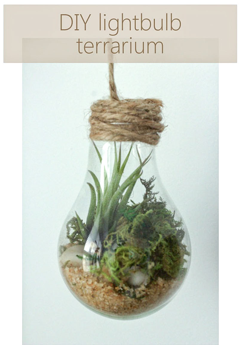 DIY upcycled lightbulb terrariums