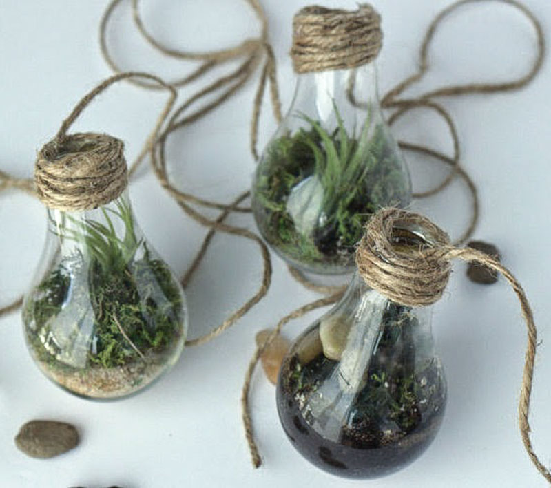 DIY lightbulb terrarium - repurposed lightbulbs