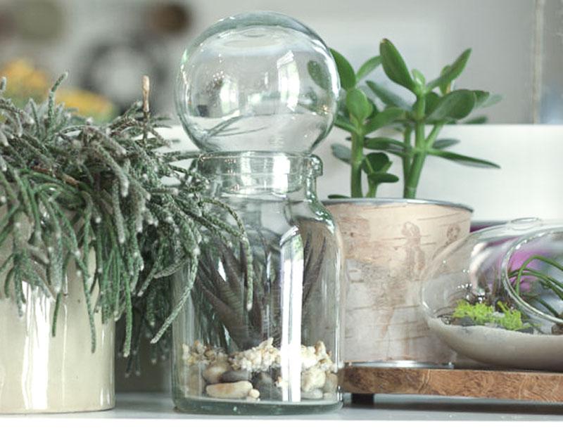 创造一个DIY的多汁角落,将自然带入室内
