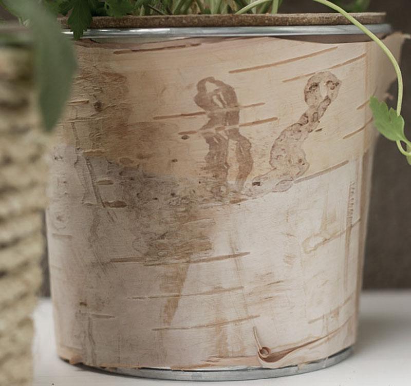Diy桦树包罐作为花盆