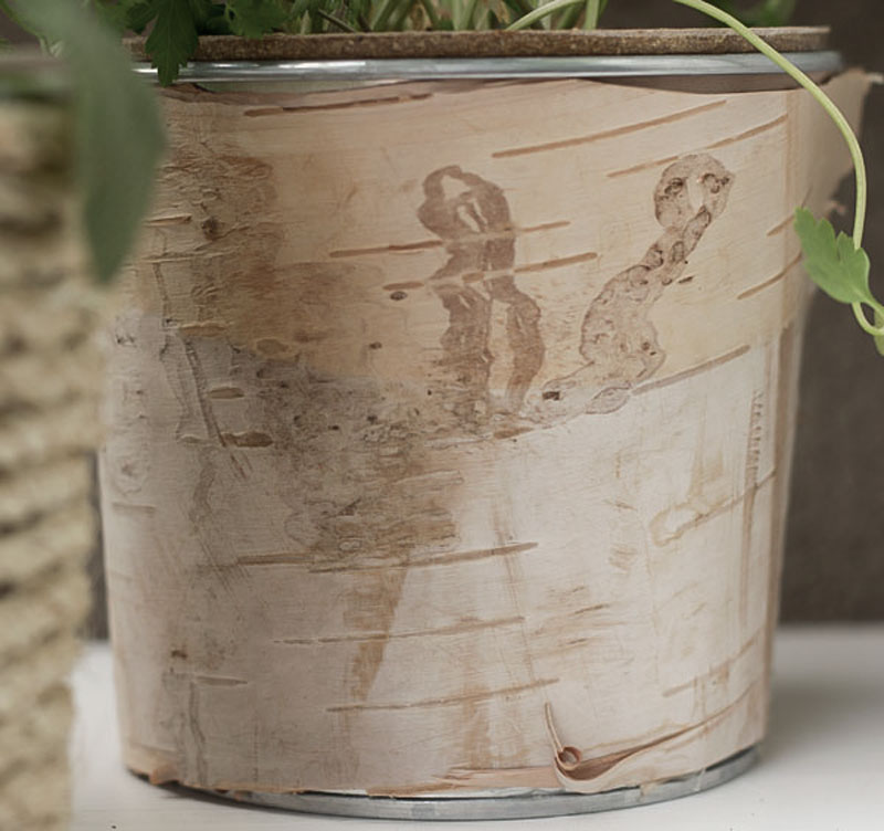 diy birch wrapped can as planter