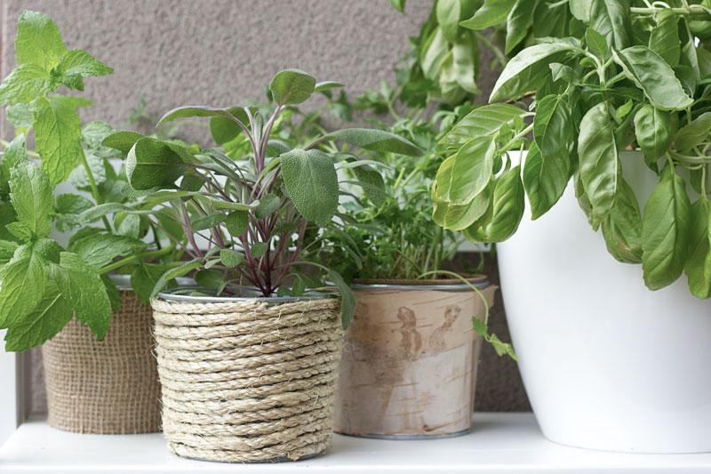 DIY repurposed cans as patio planters - sustainable patio decor