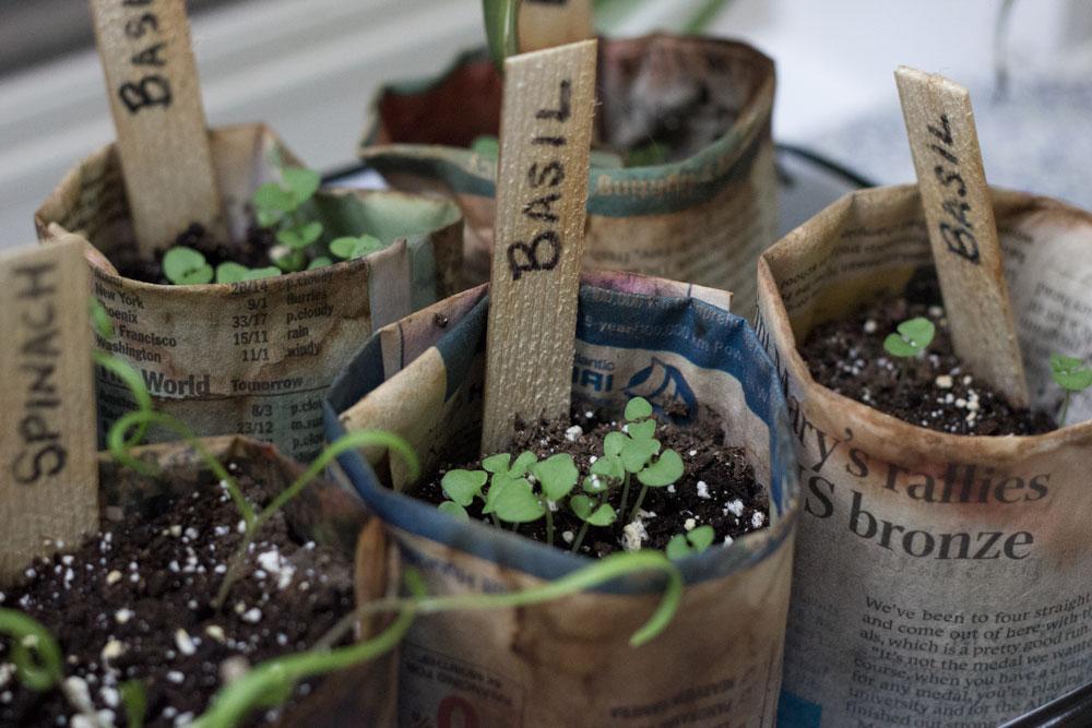 容器草本花园从种子-预算容易DIY