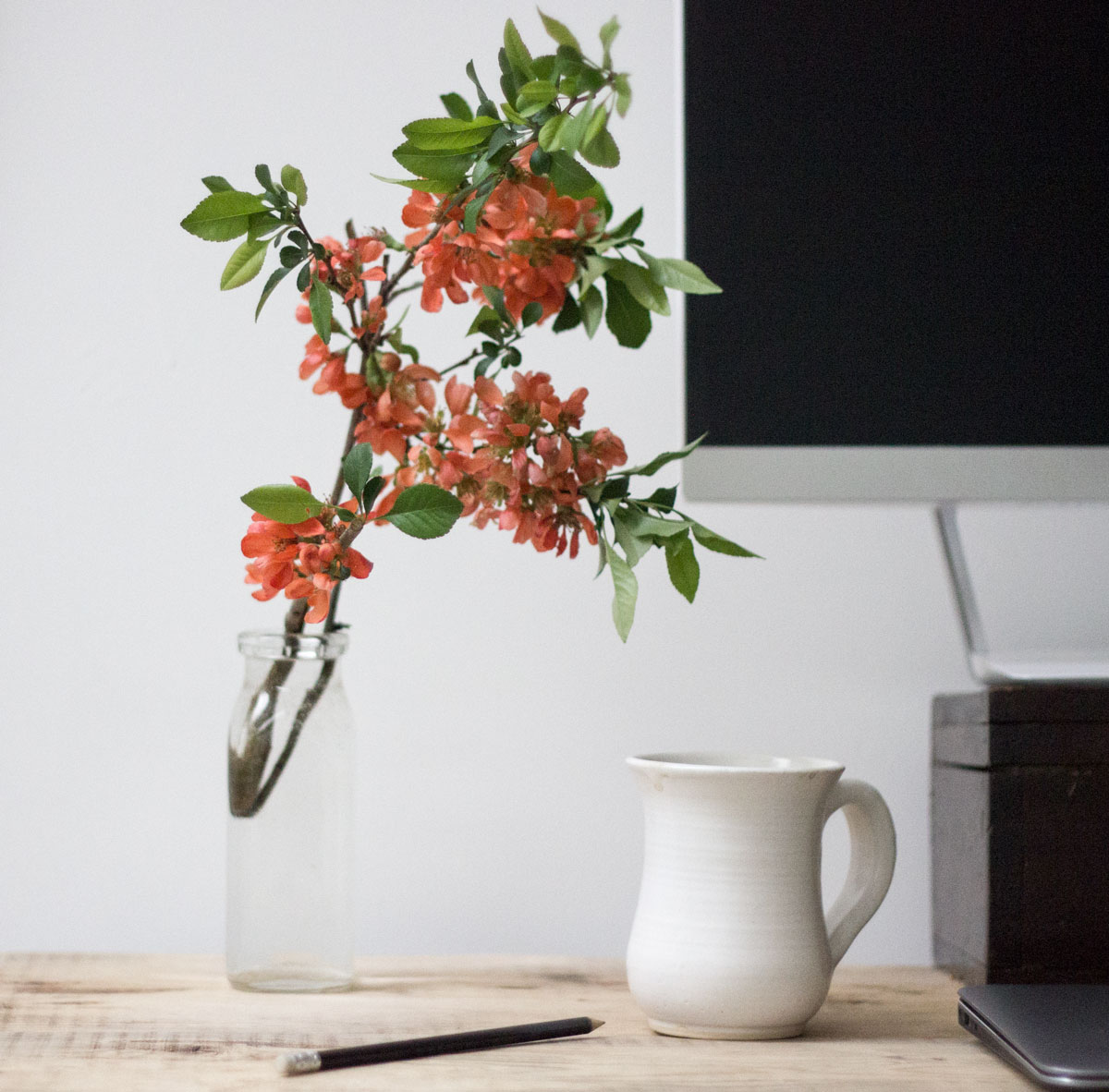 Japanese Yew as desk decor - how to bring nature inside to decorate