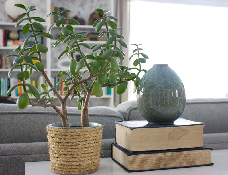 top easy to grow low care plants that clean the air