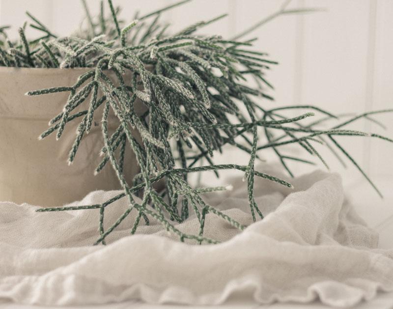 10个简单的室内植物,清洁空气