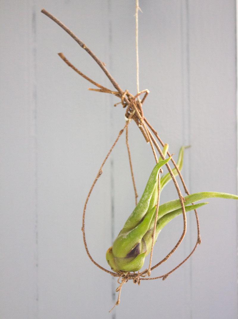 我折了几根小树枝,把它们打结在一起,做成了一个悬挂在空中的植物支架。