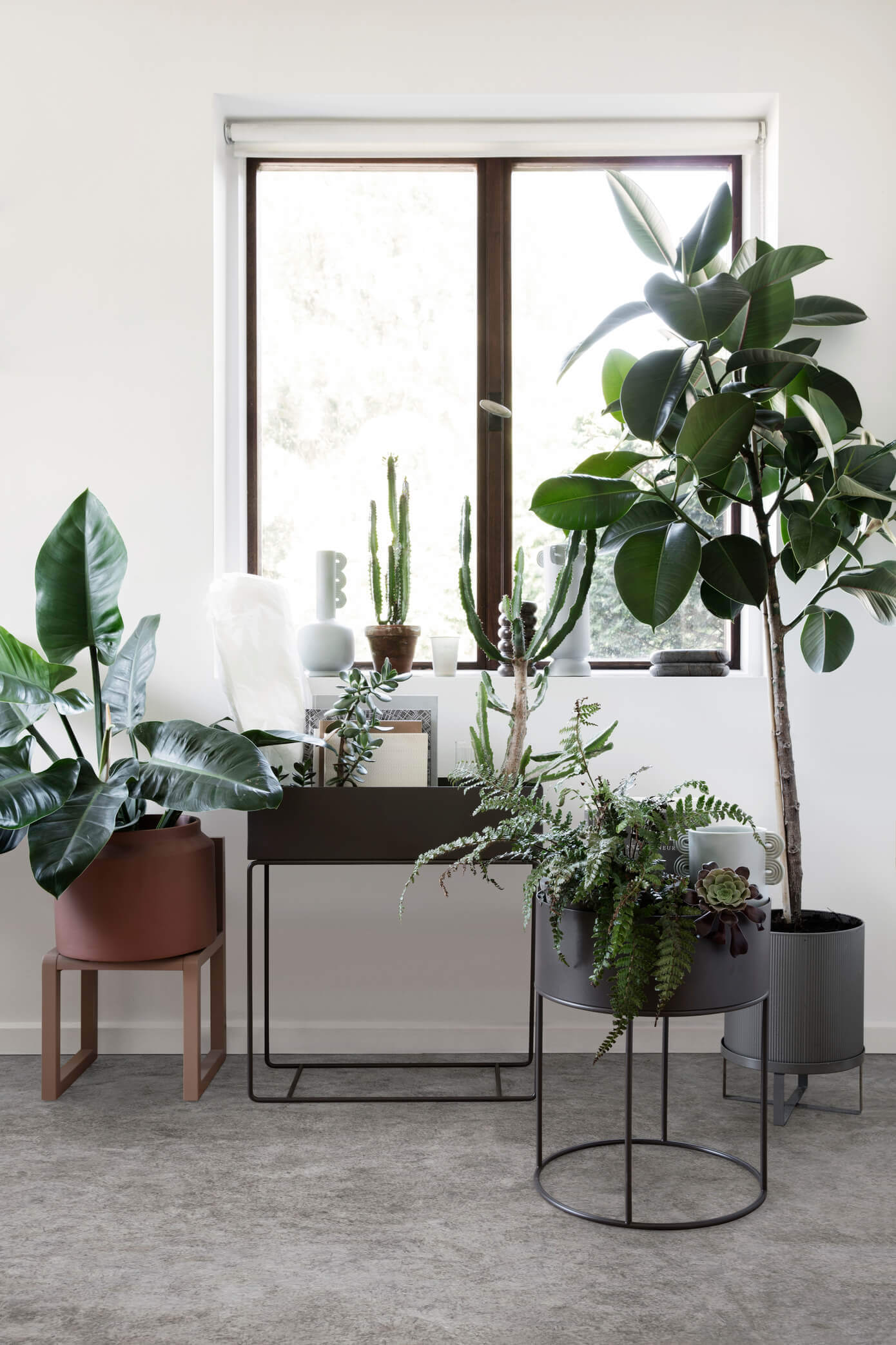 modern plant collection display