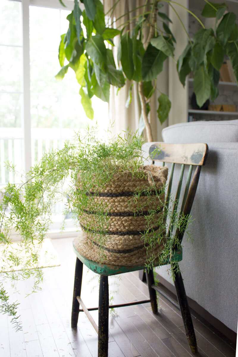 plant-in-basket.jpg