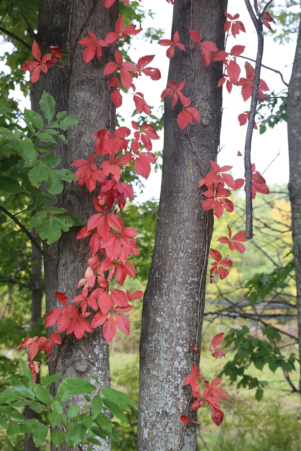foliage in old chatham, new york