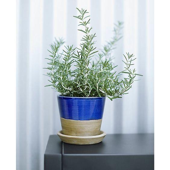 Carnivale Mini Planter