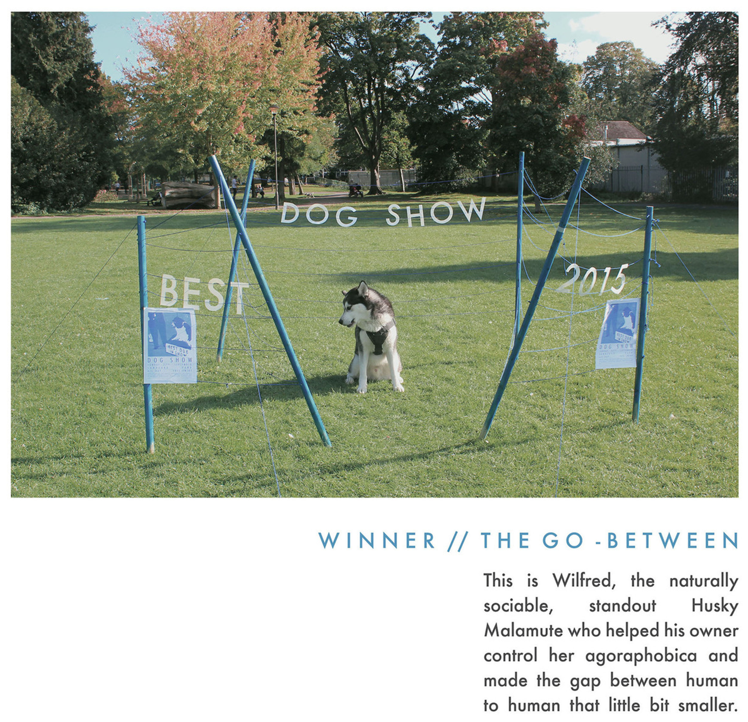 dogshow6.jpg