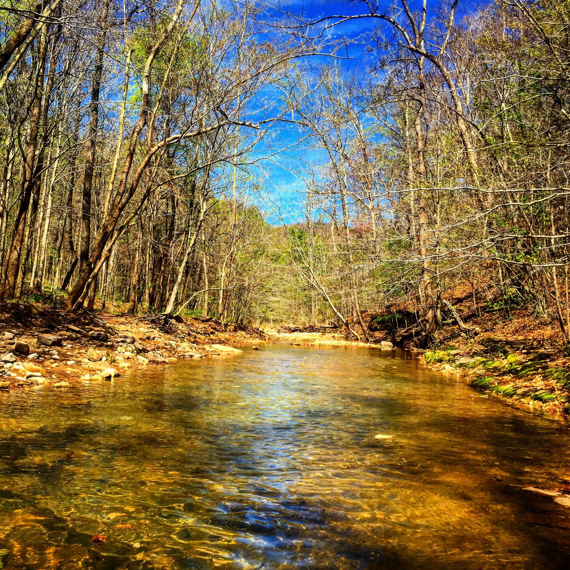The Buffalo River's gentle sounds keep travelers company.