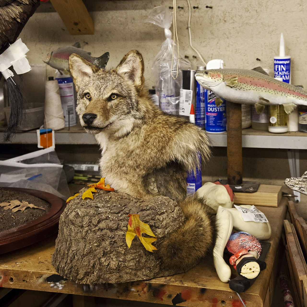 Care is taken to make each project, like this wolf, seem as lifelike as possible.