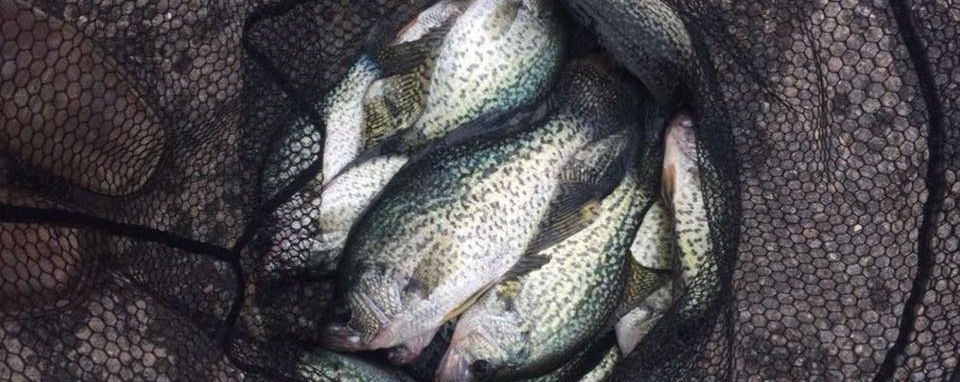 Mark Hedrick shows off a stellar fresh crappie catch from a December trip to Lake Maumelle.