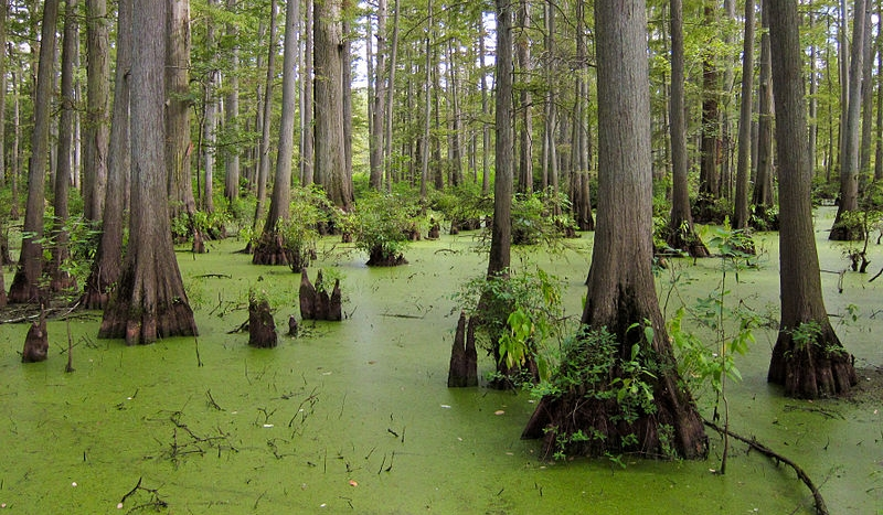 Cache River National Wildlife Refuge.
