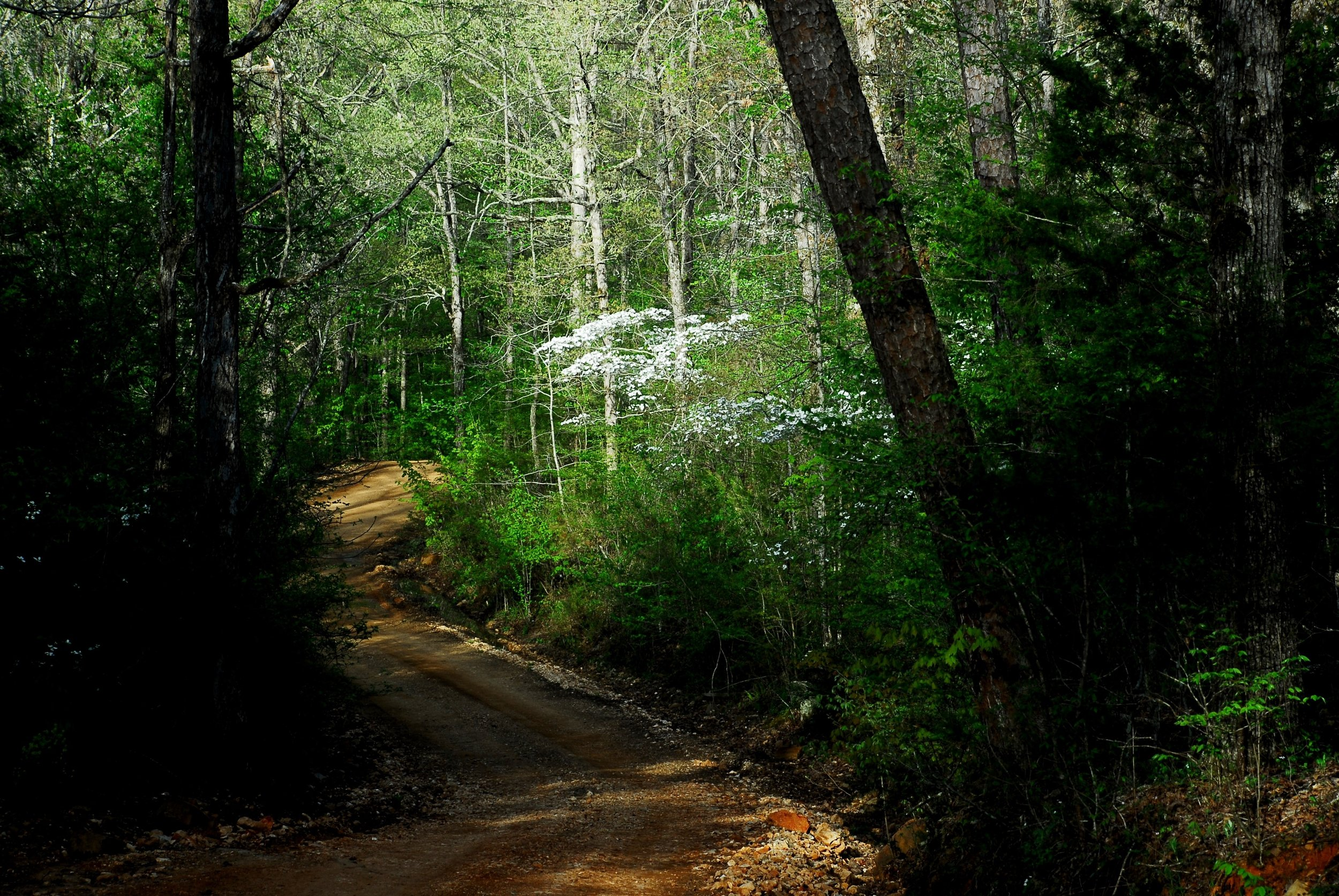 The deep woods surrounding the Meadowcreek Project near Fox provide some of Arkansas' best forest bathing opportunities.
