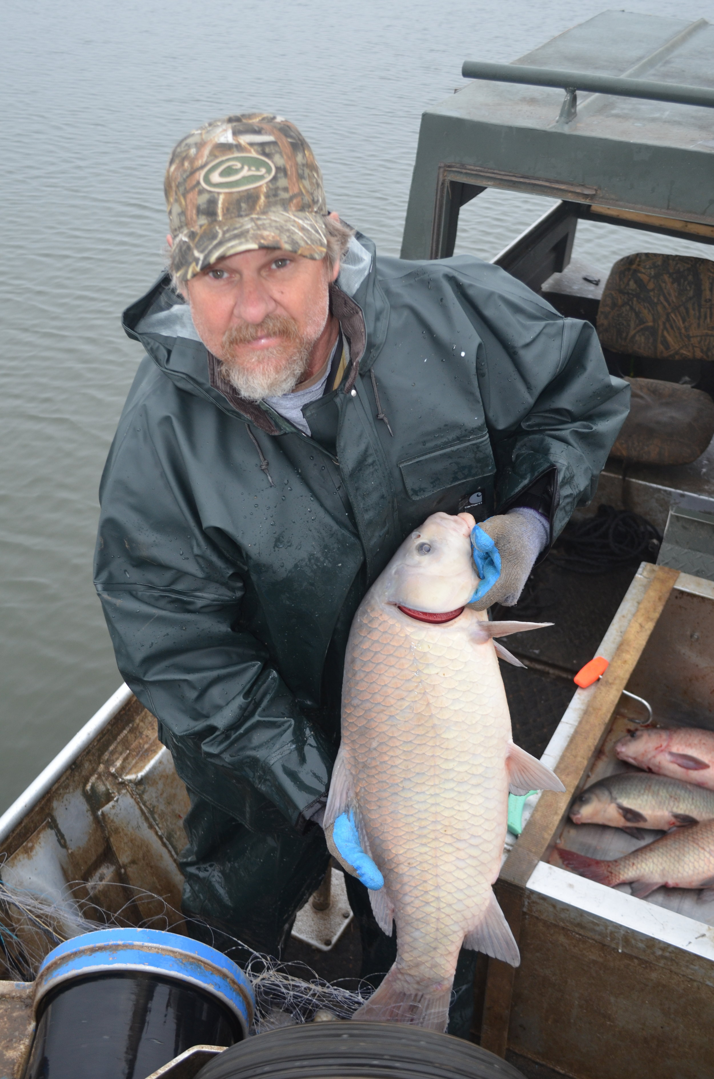 Commercial fisherman Ricky Dougan of Scott hauls in a large buffalo fish from the Arkansas River.