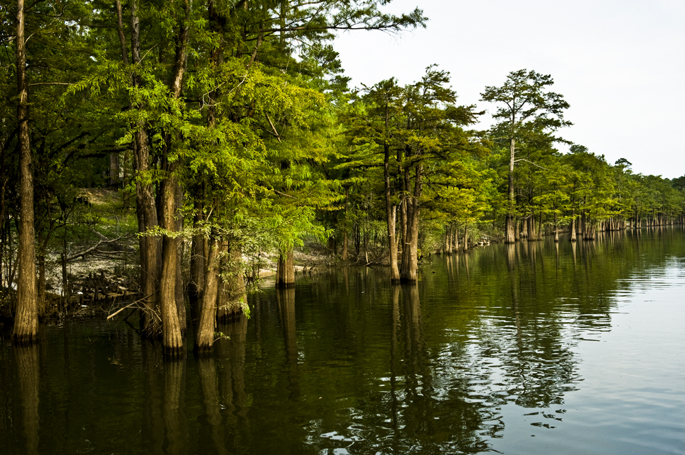 Cypress trees provide beauty and wildlife cover at Moro Bay State Park.