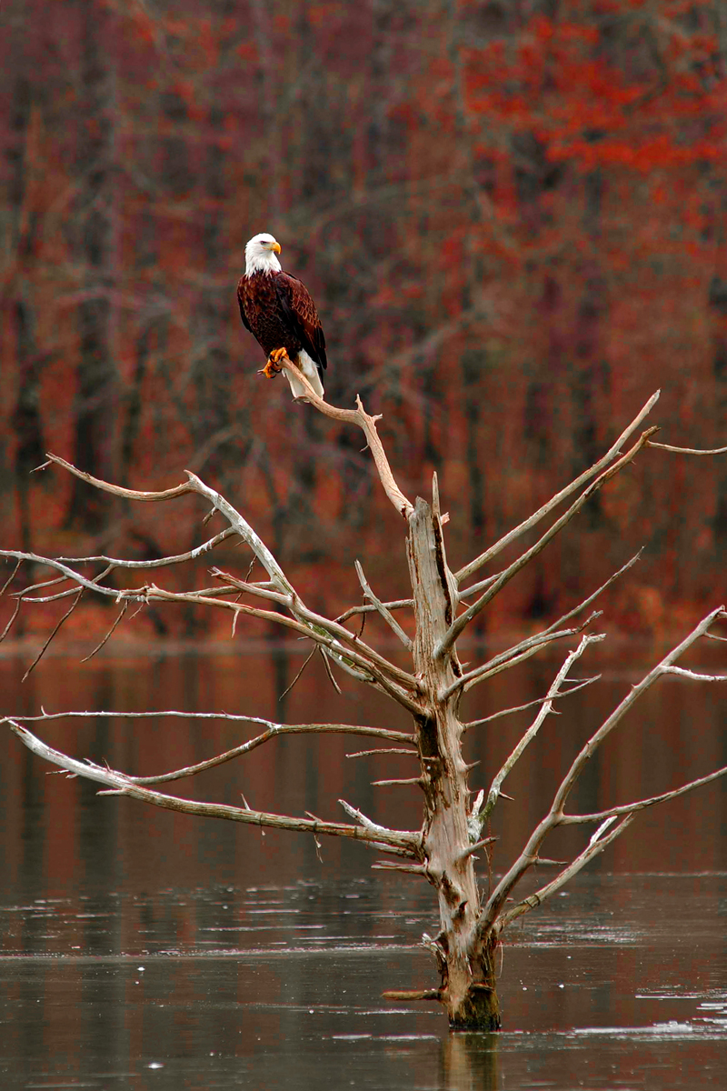 Bald eagles are just one of the many species of birds found here.
