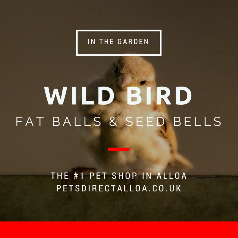 wild-bird-fat-balls-food-alloa-falkirk-stirling.jpg