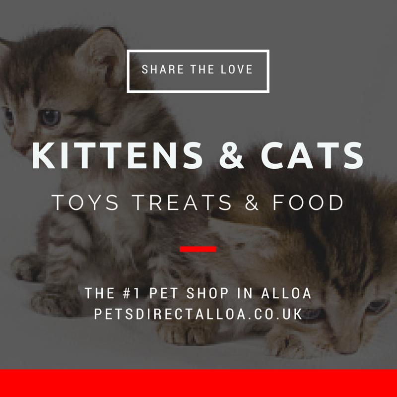 kitten-cat-food-treats-toys-alloa-falkirk-stirling.jpg
