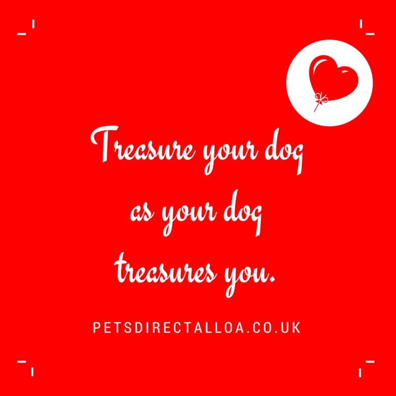 treasure-your-dog-pet-shop-alloa-falkirk-stirling.jpg