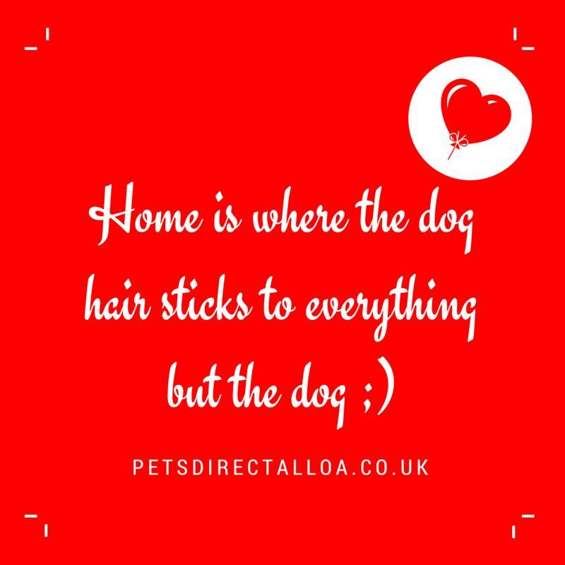 dog-foos-pets-direct-pet-shop-alloa-falkirk-stirling.jpg