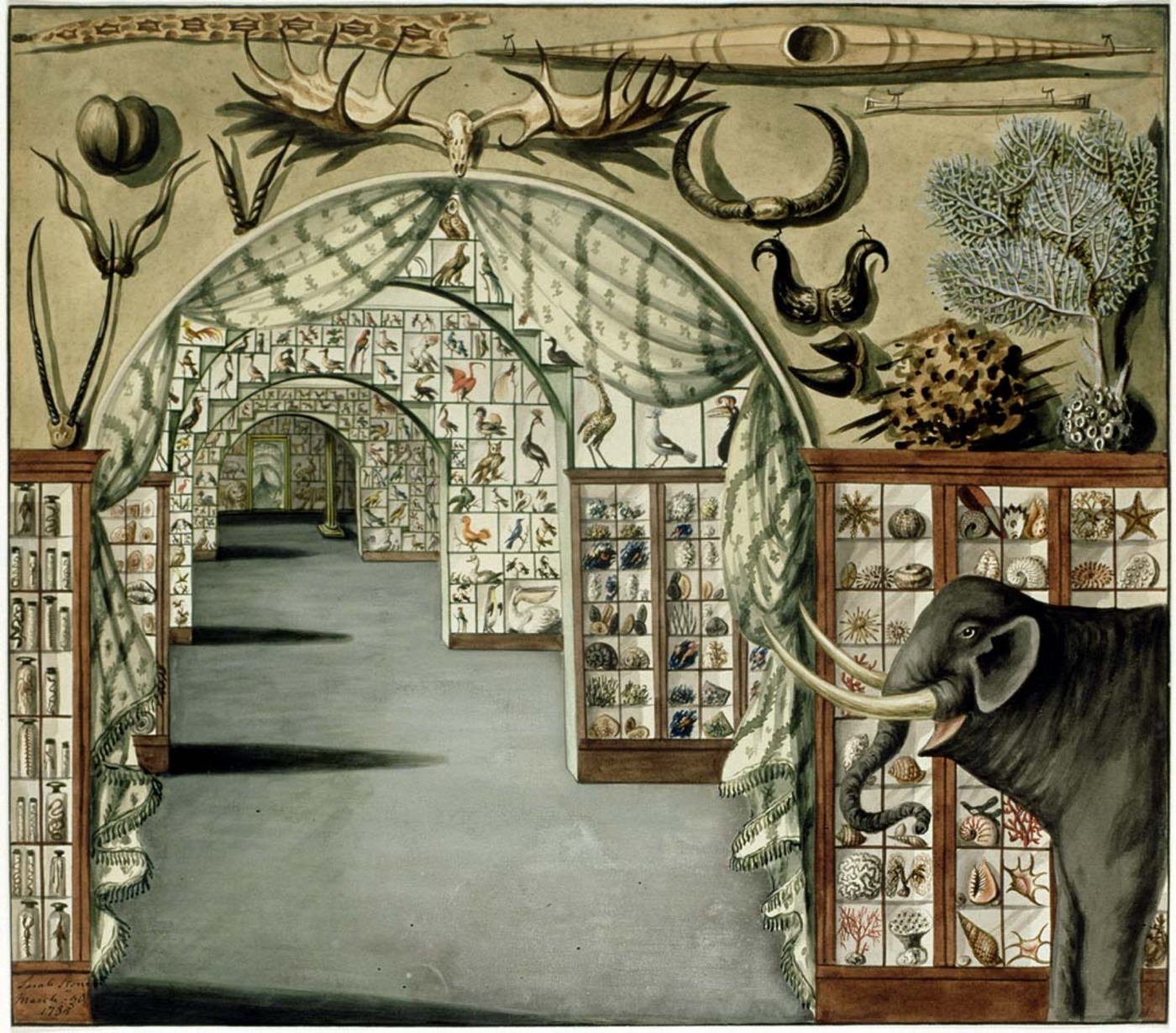 Perspective_interior_view_of_Sir_Ashton_Lever's_Museum_in_Leicester_Square,_London_March_30_1785._Watercolour_by_Sarah_Stone.jpg