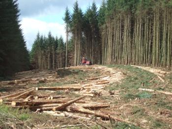 Timber_harvesting_in_Kielder_Forest for Better Land use post.JPG
