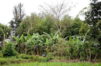 Agroforestry_in_Masaka._VI_Agroforestry.jpg